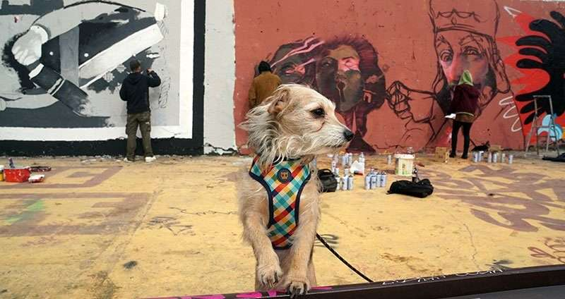 dog watching street art